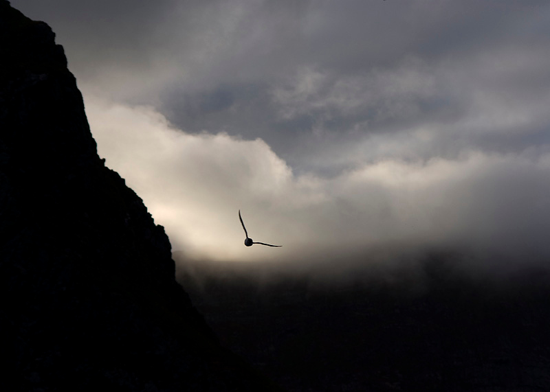 Bird towards dusk