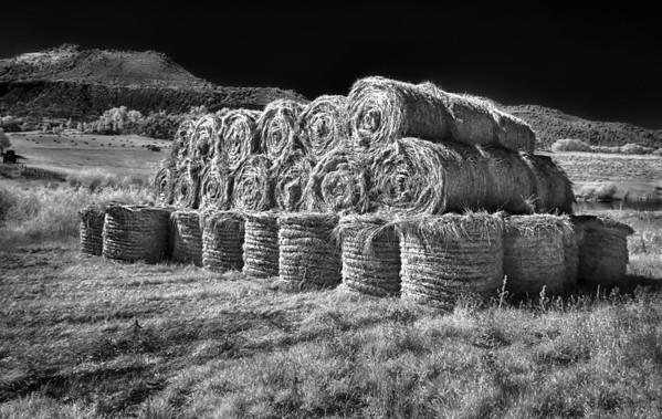 Bales of hay rolled and ready in Colorado