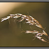Straw in the wind III