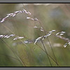 Straw in the wind I
