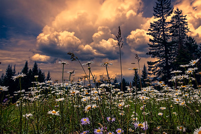 Fire in the Sky Meadow