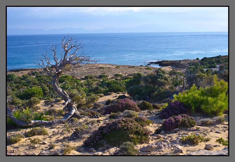 Dry, but green landscape - by Fetife