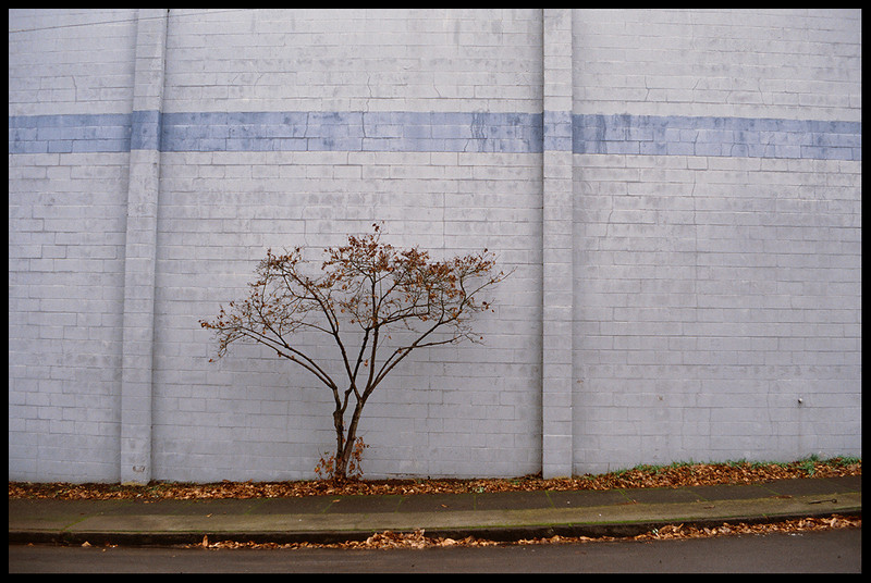 S. E. Umatilla St. (tree and wall).