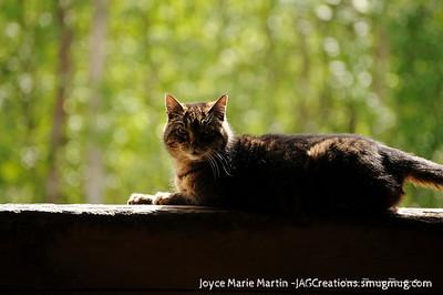 Barn Cat 4