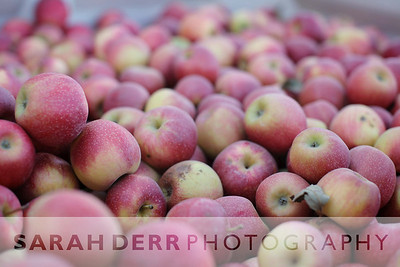 Pumpkins & Apples at Carter Mountain Orchard 2012
