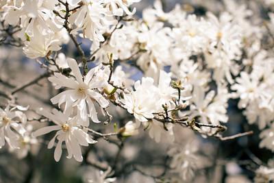 DC Spring '14
