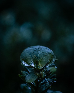 Ice in greens and blues