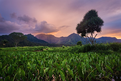 Chasing Dreams - Hanalei National Wildlife Refuge - Kauai, Hawaii