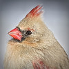 Headshot of Female Cardinal