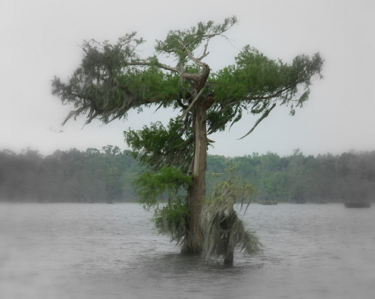 A fast moving storm sweeping across the bayou on Lake Martin, Louisiana