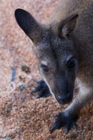 My new kangaroo friend
