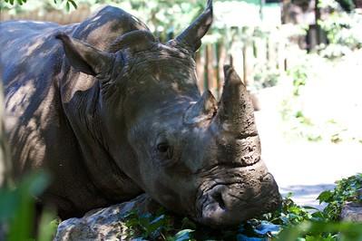 Handy rhino