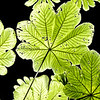 Green leaves<br /> (for printing in square sizes only:12x12, 20x20)