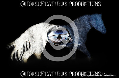 Horsefeathers Art For Sale