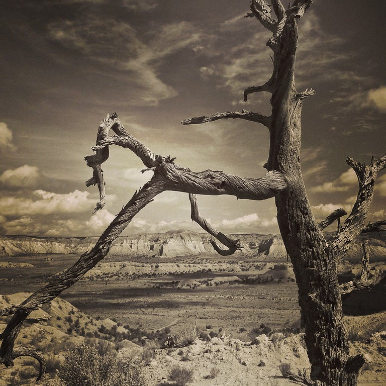 Dead Juniper on Grand Staircase National Monument