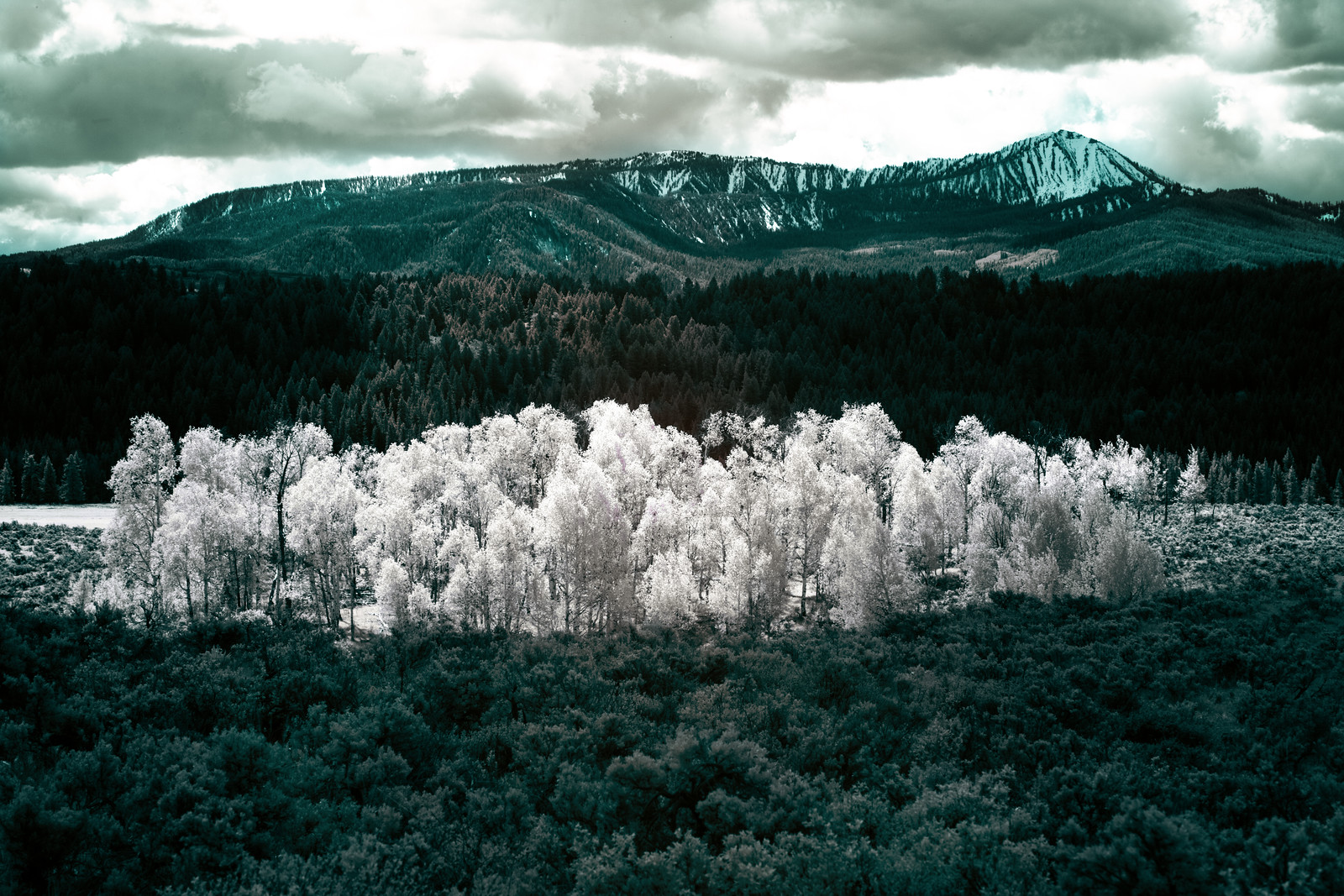 Infrared Landscapes:  The Stand