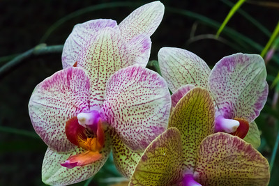 The Lincoln Park Conservatory Flowers - Bright color flower