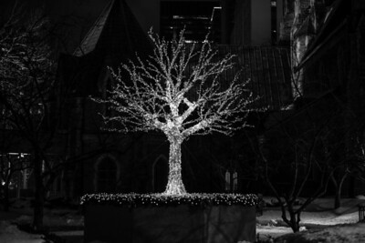 """TREE OF LIGHT"" (Serial No.: 20131229-6576) Illuminated tree in a park, Montreal, Quebec, Canada"