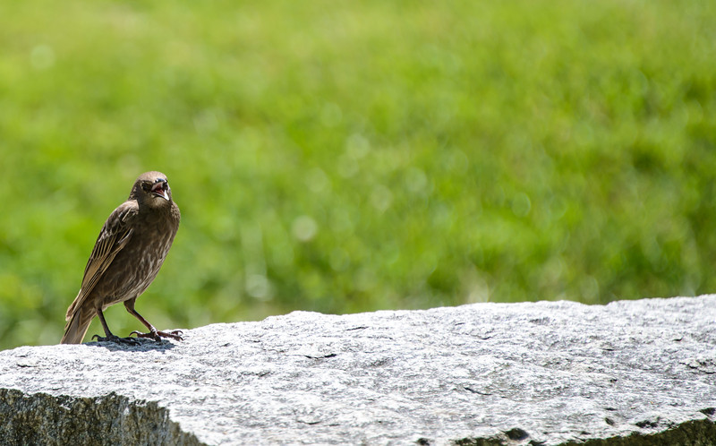 2012-06-30_13 26 33_DSC2300_Angry Bird