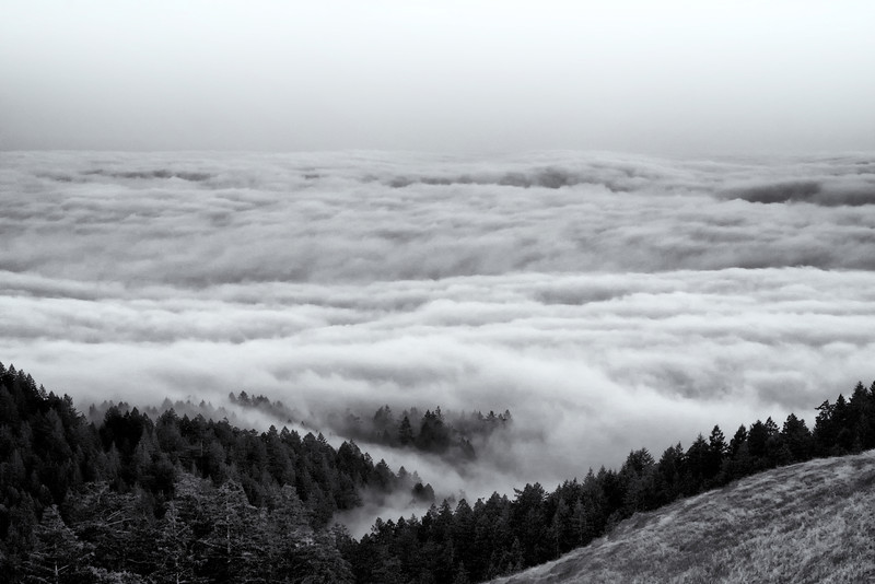 Above the clouds Mt. Tamalpais ref: c9c0158d-4912-4ebb-a5d6-a2482447987c
