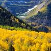 Fall Aspen | Mt Timpanogos
