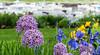 Harborside Flower Patch
