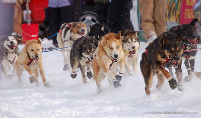 Iditarod XXXV
