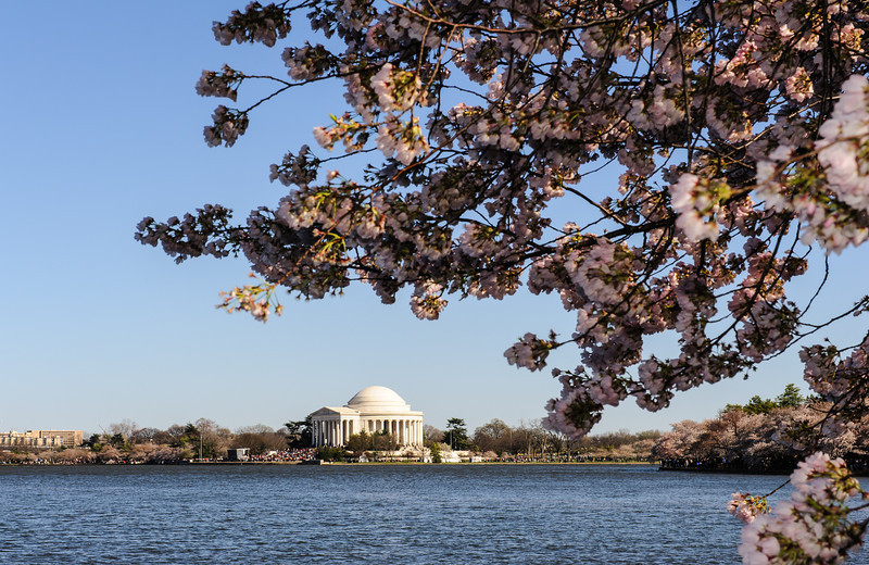 Jefferson Memorial Bloom