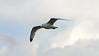Seagull's Flight