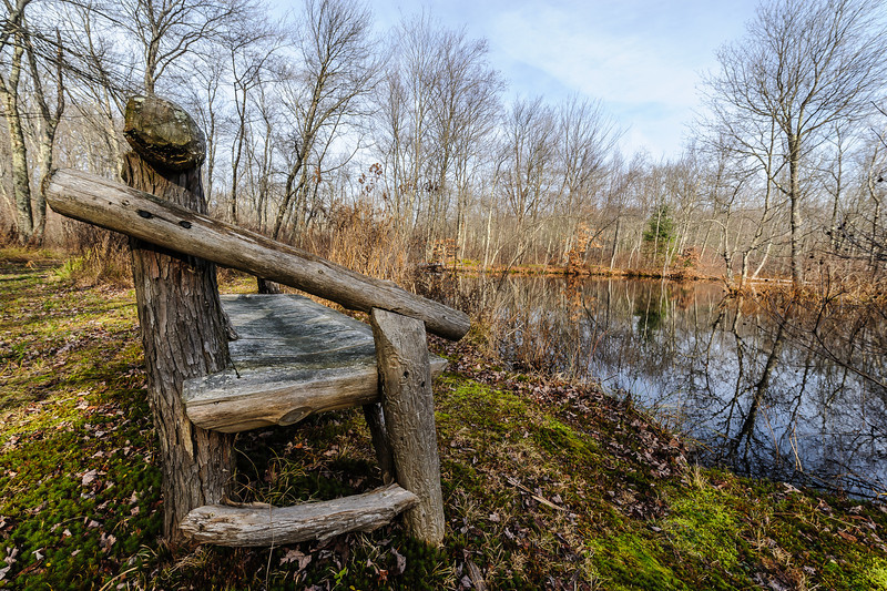 Nature's Bench