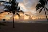 Tropical Ft. Lauderdale