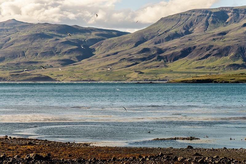Hvalfjörður Flock
