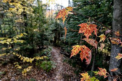Autumn Tease