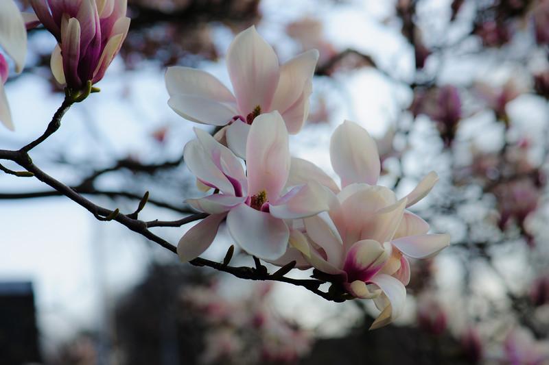 Pink Shades of Spring