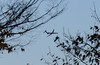 Branched Flight