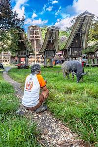 buffalo keeper, Sulawesi Indonesia