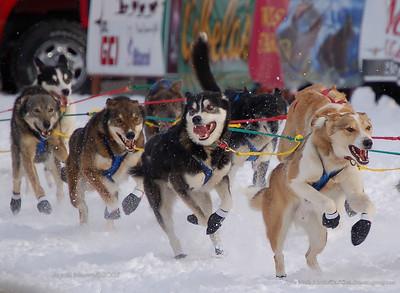 OH BOY!  Lets go!! Iditarod XXXV