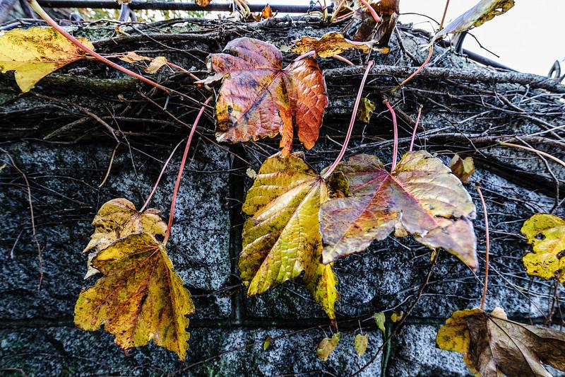 Leafy Grit