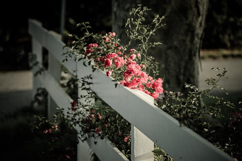 Fenced Bloom