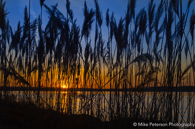A sunset view from deep in the reeds (East Grand Traverse Bay, Mi).