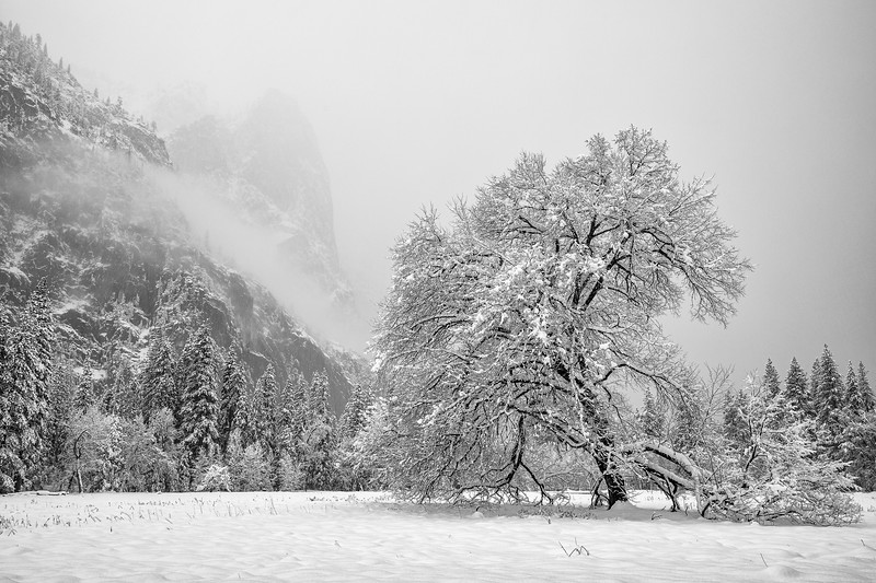 Snow Covered Cook's Meadow