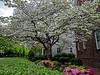 Flourishing Spring