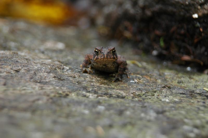 Hello Froggie!