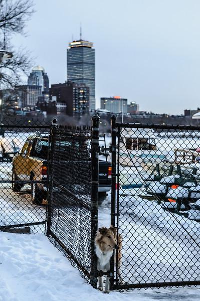 Snowy City Guard