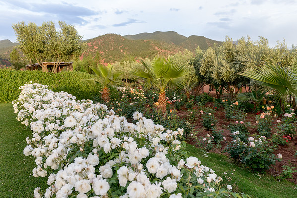Moroccan Rose Garden