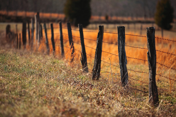 Barbed Wire Fence, Foothills of North Carolina (Photo: Kelly J. Owen)