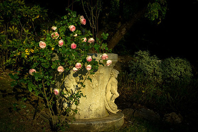 """FOUNTAIN OF ROSES"" (Serial No.: 20130605-0221)"