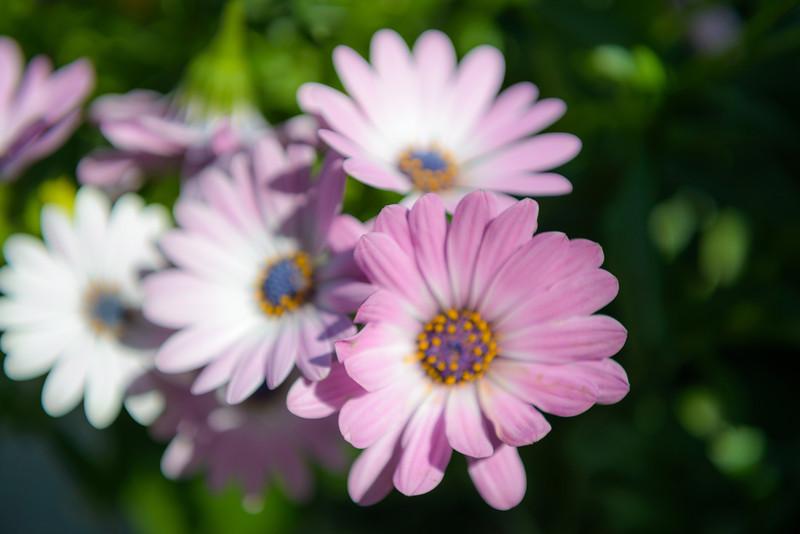 Fading Flora