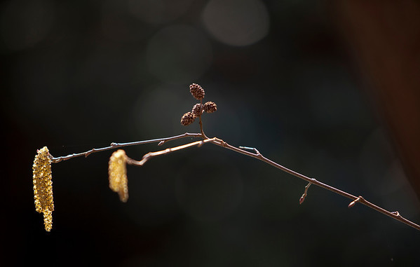 Nature reborn in South Mountains State Park, North Carolina (Photo: Kelly J. Owen)