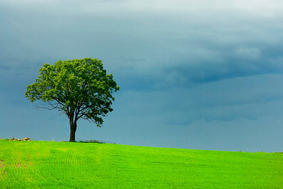 Green Tree, Dark Sky -- Minnesota